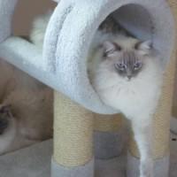 Luna & Skye
